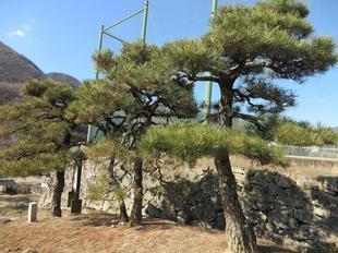 houkoku-onegoya5.jpg