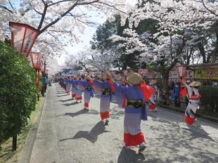 2021-3-27sakura-open11.jpg