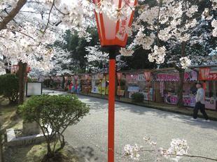 2021-3-27sakura-open14.jpg