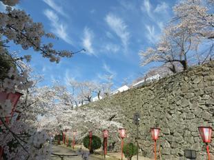 2021-3-27sakura-open17.jpg