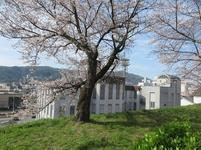 2021-3-27sakura-open18.jpg
