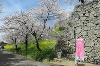 2021-3-27sakura-open19.jpg