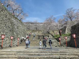 2021-3-27sakura-open3.jpg