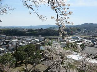 2021-3-27sakura-open39.jpg