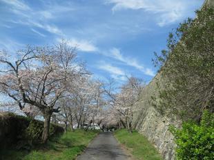 sakuramaysuri2021-5.jpg