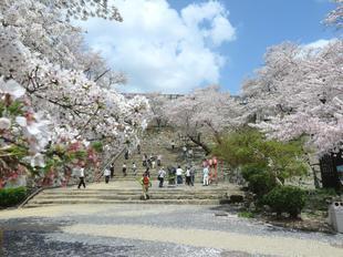 2021-kakuzansakura18.jpg