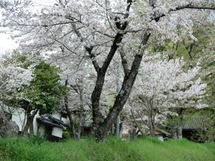 shirakami2021-1.jpg