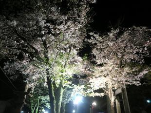 shirakami2021-10.jpg