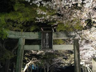 shirakami2021-12.jpg