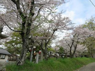 shirakami2021-2.jpg