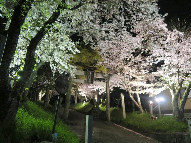 shirakami2021-6.jpg