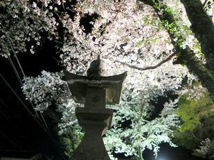 shirakami2021-7.jpg