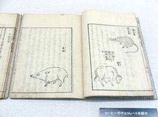 yougaku2021-4-17.jpg
