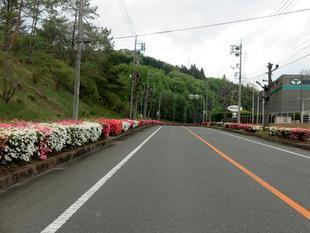 4-25-tsutsuji1.jpg