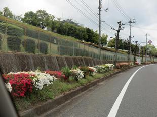 4-25-tsutsuji3.jpg
