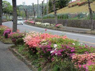4-25-tsutsuji4.jpg
