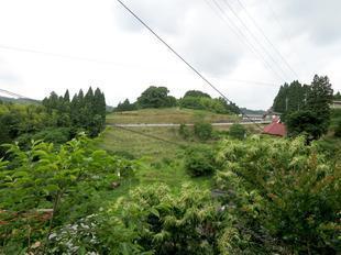 2021-6-15daigozakura1.jpg