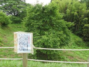 2021-6-15daigozakura7.jpg