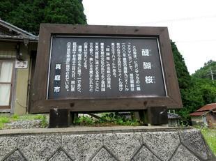 2021-6-15daigozakura9.jpg