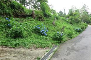 2021-6-19kiyama5.jpg