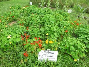 6-27makibanoyakata20.jpg