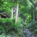 2021小滝とあじさいの花(八社)