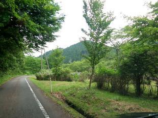 wood_ajisai1.jpg