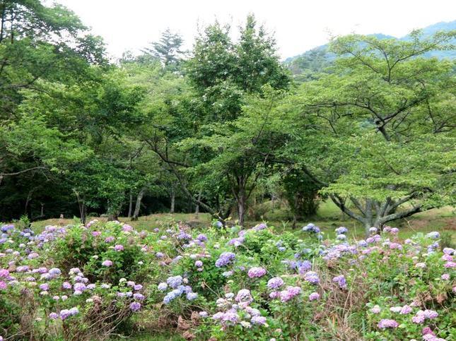 wood_ajisai14.jpg