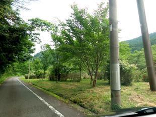 wood_ajisai2.jpg