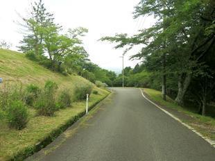 wood_ajisai4.jpg