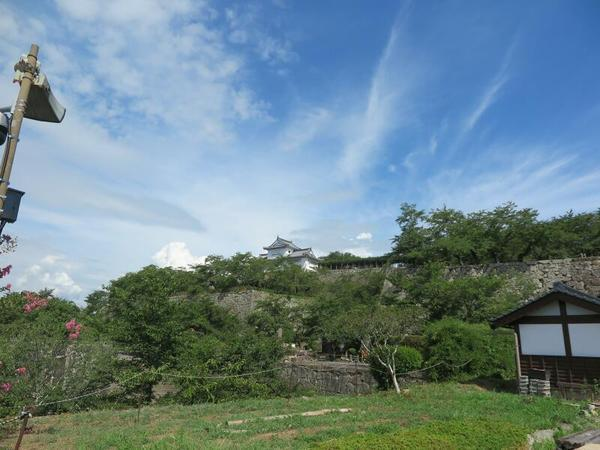 津山城(鶴山公園)のフジの花