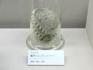 2021-8yougaku26.jpg