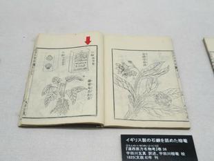 2021-8yougaku8.jpg