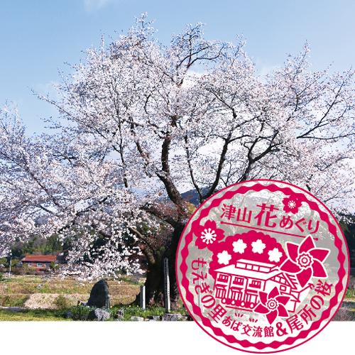 あば交流館&尾所の桜