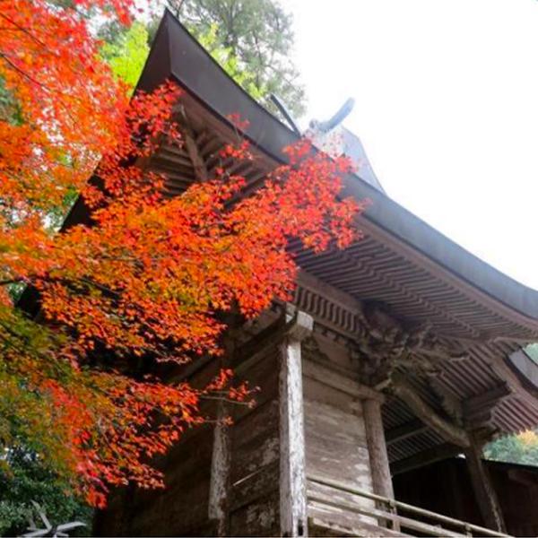天石門別神社の紅葉