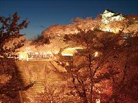津山さくらまつりイベント