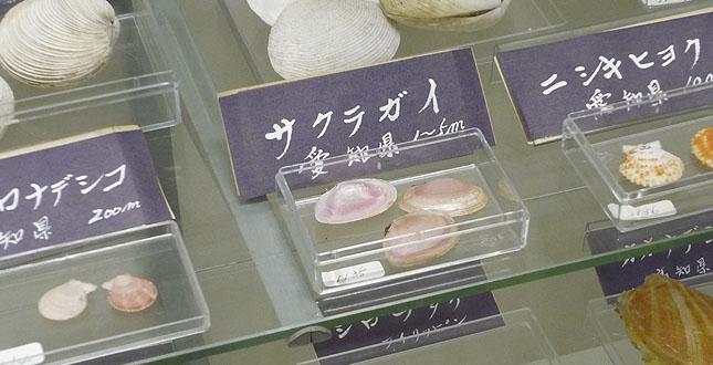 fushigi_kai.jpg