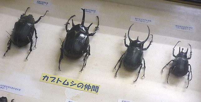 fushigi_mushi05.jpg