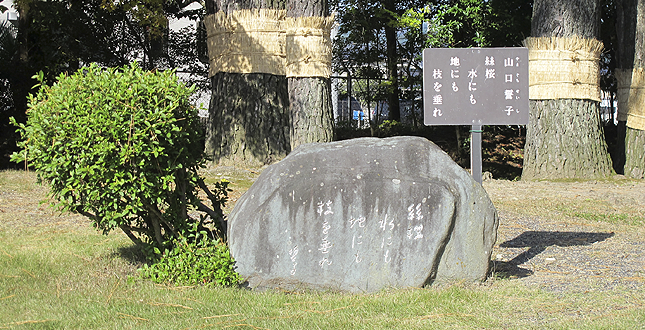 shuraku_yamaguchi.png
